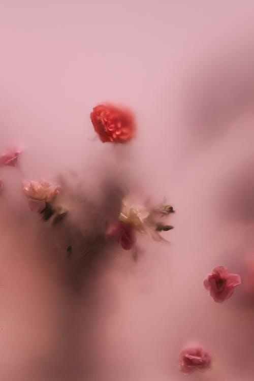 Immagine gratuita di amore, astratto, bocciolo