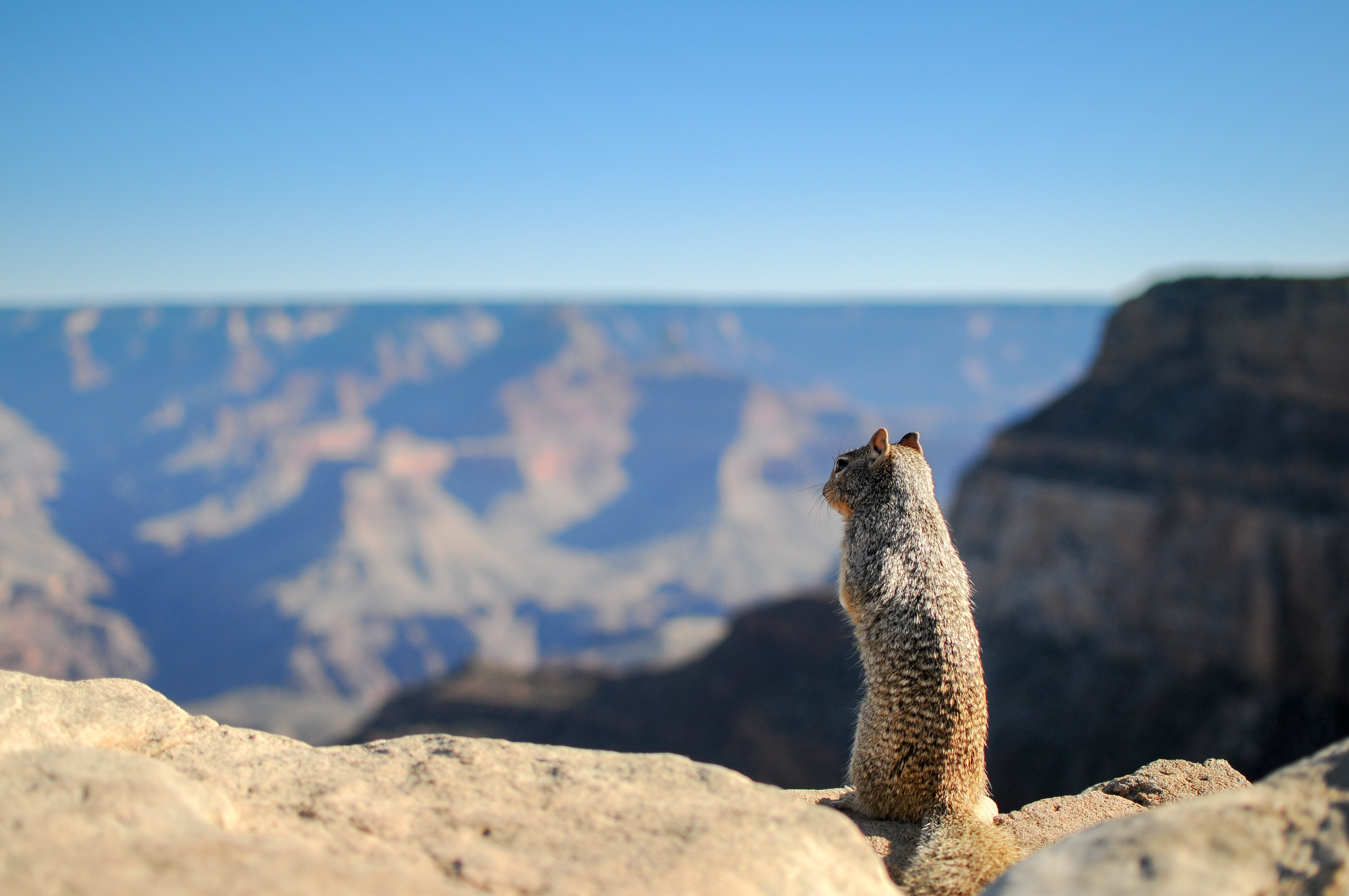 Brown Squirrel Standing on Brown Rock Formation