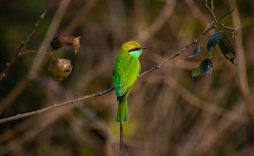 Small bird sitting on thin branch