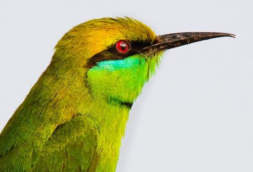 Immagine gratuita di ala, ambiente, animale