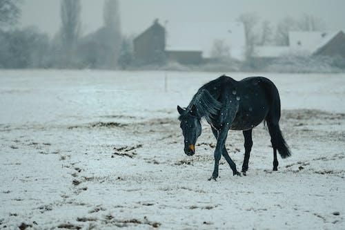 Black Horse Running on White Sand