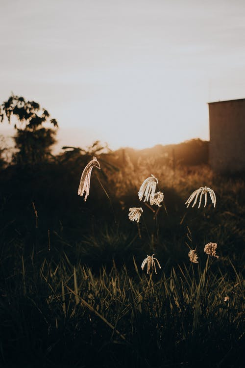 Plants growing on meadow in countryside at sunset