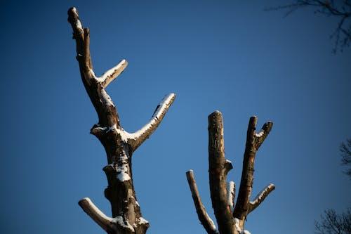 Gratis lagerfoto af blå himmel, cutted, sne