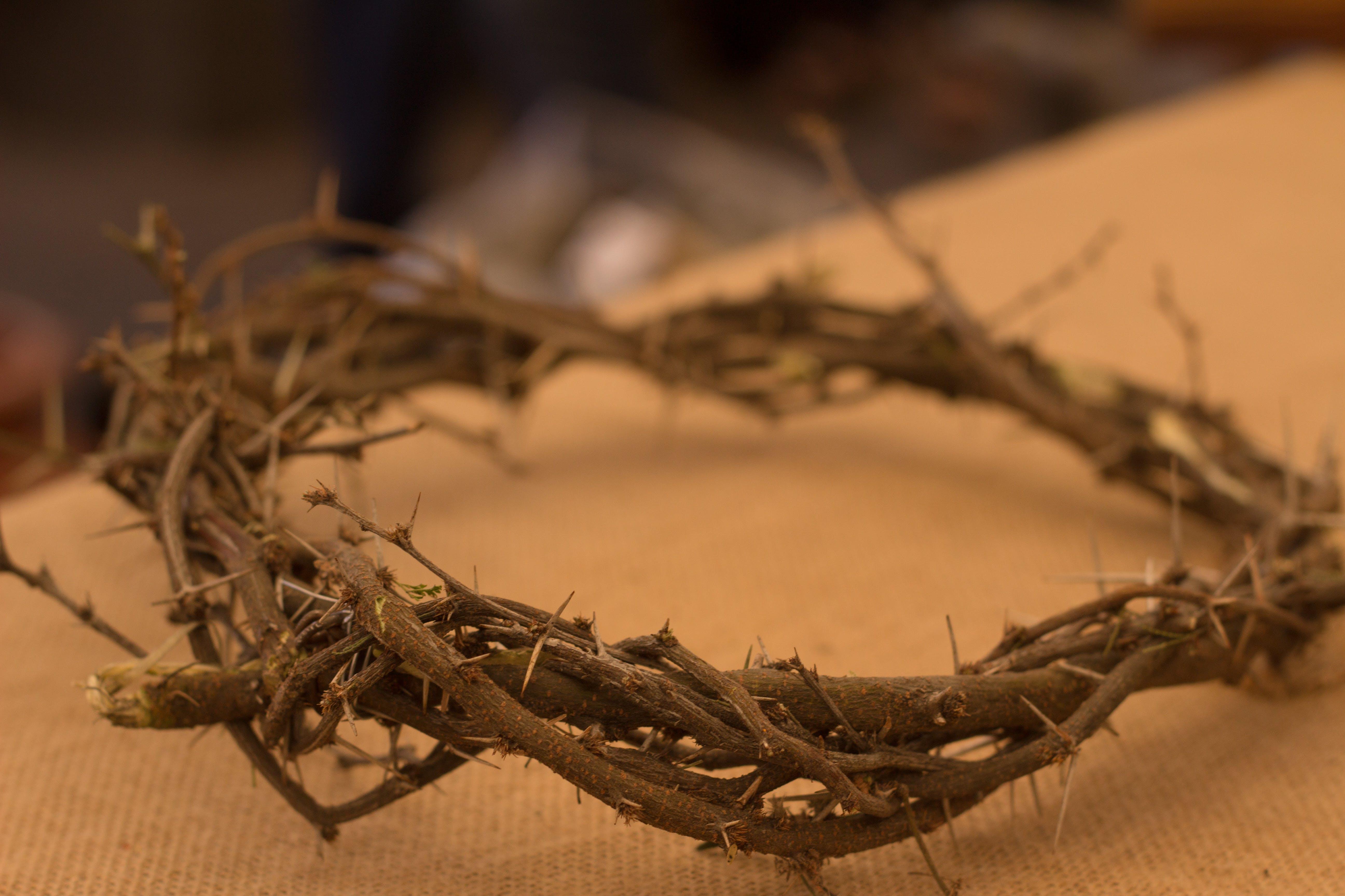 Fotobanka sbezplatnými fotkami na tému Ježiš, koruna z tŕňov, kresťanstvo, Kristus