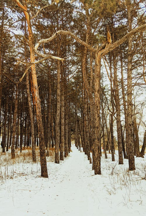 Trees growing in winter forest