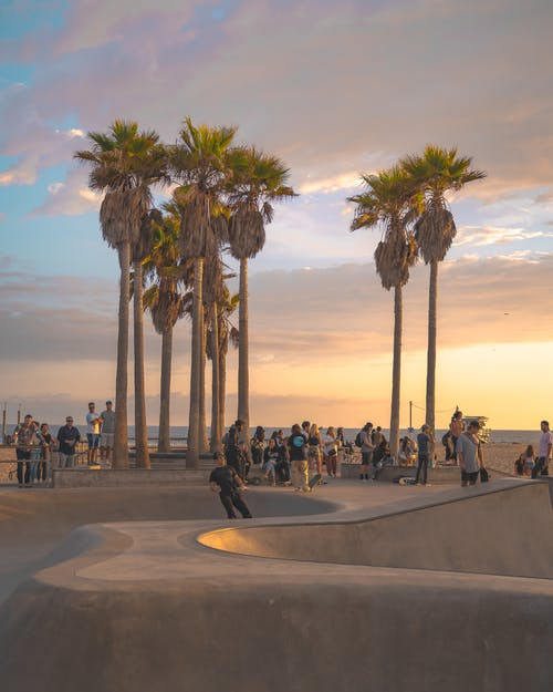 People Sitting on Gray Concrete Bench Near Palm Trees
