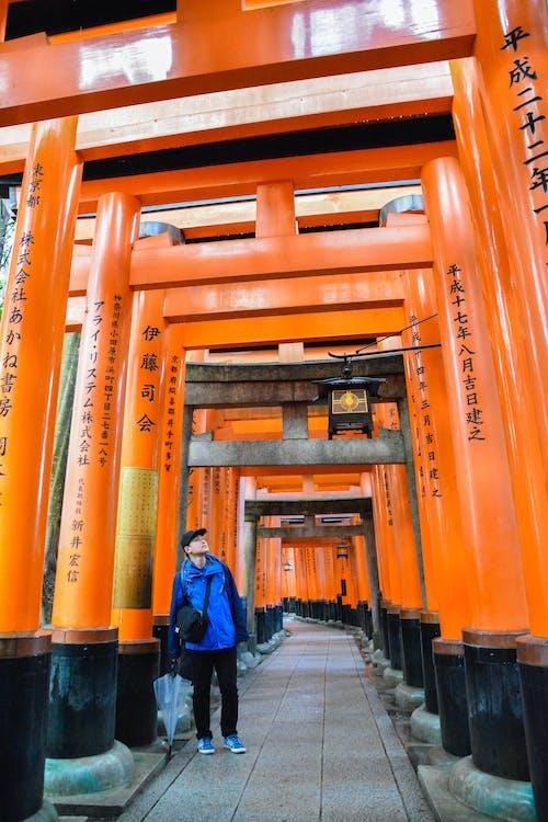 Kostenloses Stock Foto zu 京都, 鳥 鳥
