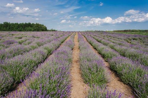 Fotobanka sbezplatnými fotkami na tému exteriéry, flóra, hracie pole