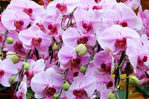 Imagine de stoc gratuită din floare, floră, flori roz