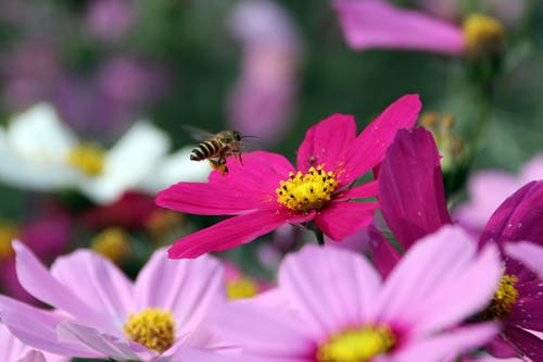 A Bee Flying Over a Red Flower