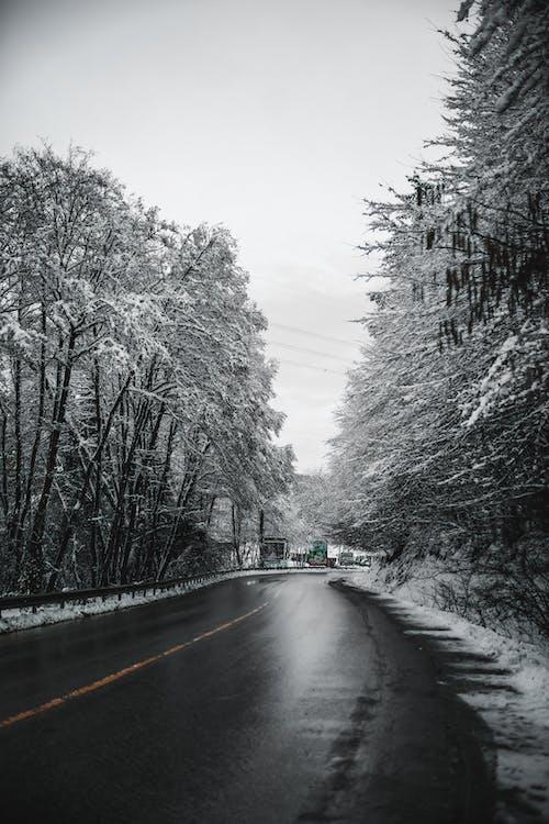 ağaç, ahşap, arazi içeren Ücretsiz stok fotoğraf