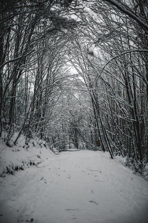 ağaç, ahşap, buz içeren Ücretsiz stok fotoğraf
