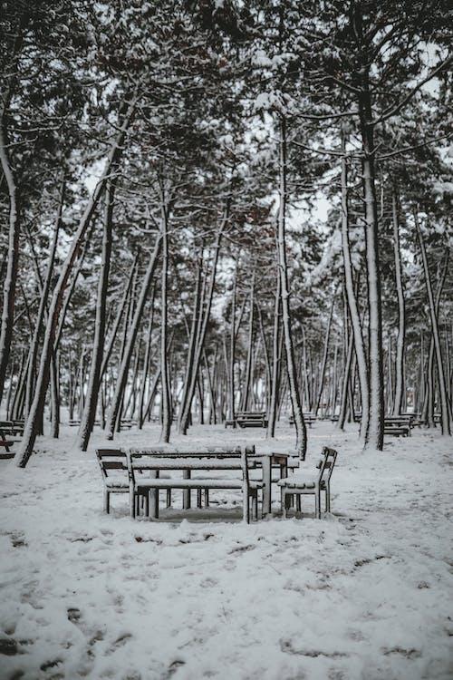 ağaç, ahşap, Bank içeren Ücretsiz stok fotoğraf