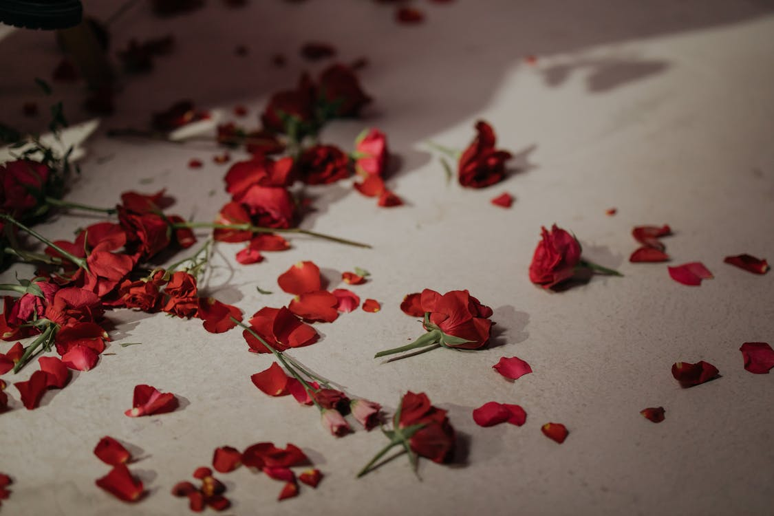 Petals Of Red Roses On White Bed Linen