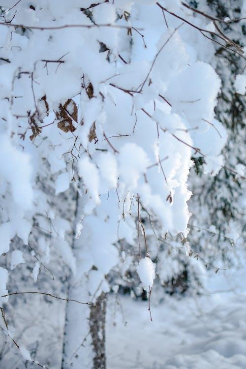 冬季, 冷, 冷冰的 的 免費圖庫相片