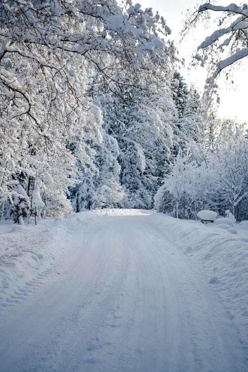 Photo of Snow Covered Trees and Road