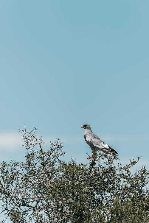 Δωρεάν στοκ φωτογραφιών με άγρια φύση, γεράκι, δέντρο