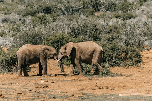 Elephants Standing on Brown Soil Near Bushes