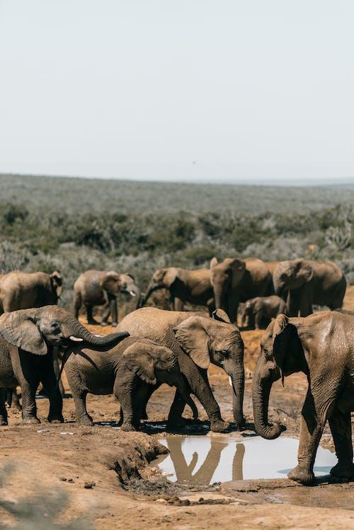 Group of Elephants on Green Grass Field
