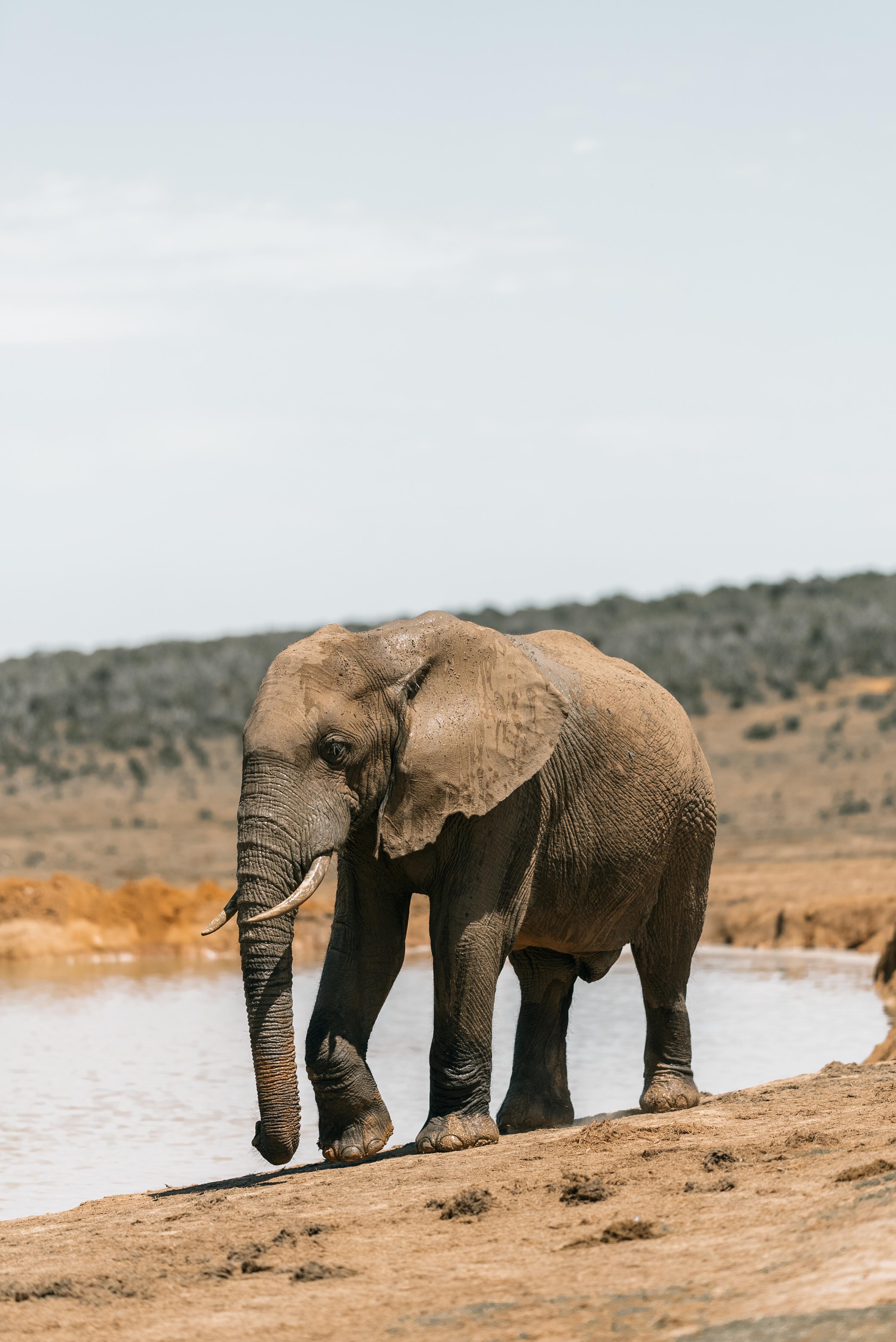 sand water desert animal