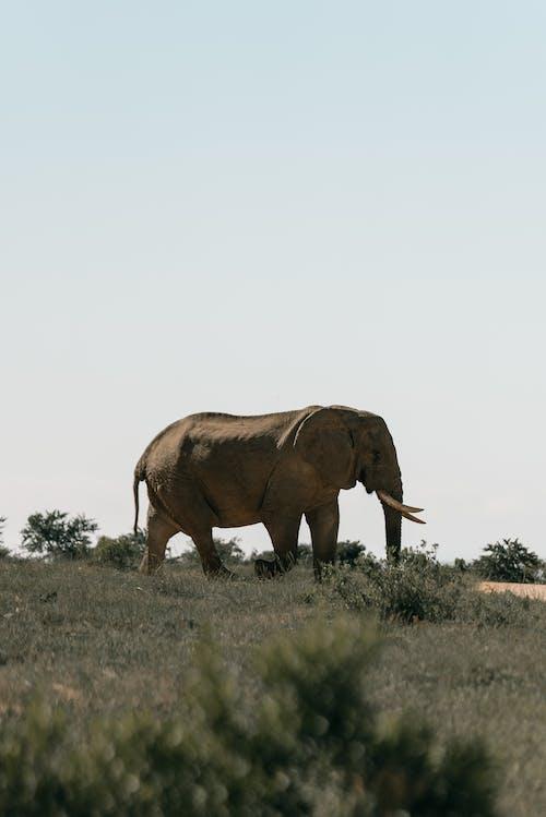 Darmowe zdjęcie z galerii z afryka, afryka południowa, afrykańska przyroda, barbarzyński