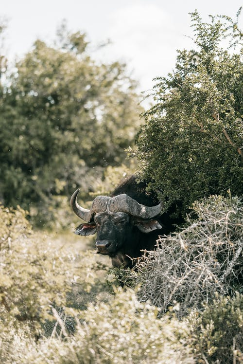 Foto profissional grátis de África do Sul, animal, arbustos