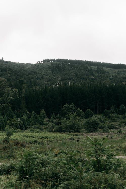 Gratis arkivbilde med ås, bakke, fjell