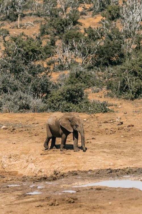 Photos gratuites de afrique du sud, animal, buissons