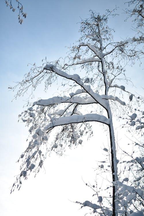 Kostenloses Stock Foto zu baum, einfrieren, kalt