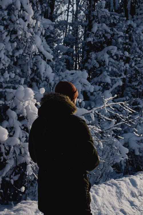Kostenloses Stock Foto zu einfrieren, jacke, kalt