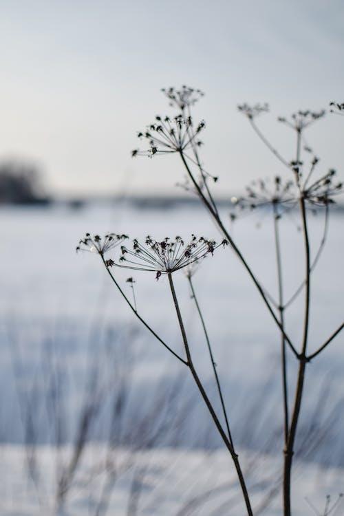 Darmowe zdjęcie z galerii z gałęzie, kwiaty, monochromatyczny