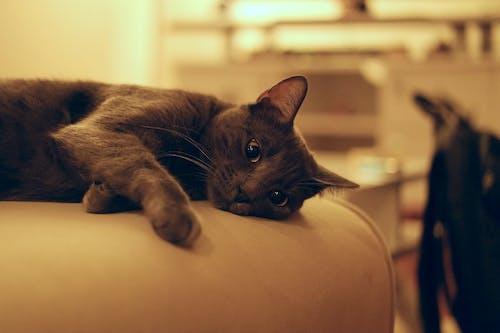 Δωρεάν στοκ φωτογραφιών με αιλουροειδές, αξιολάτρευτος, Γάτα, γατάκι