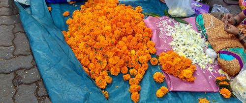 印度, 印度人, 孟買, 花 的 免費圖庫相片