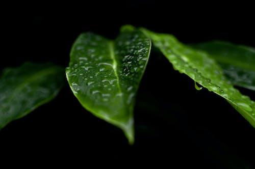Foto stok gratis air, basah, dasar, daun daun