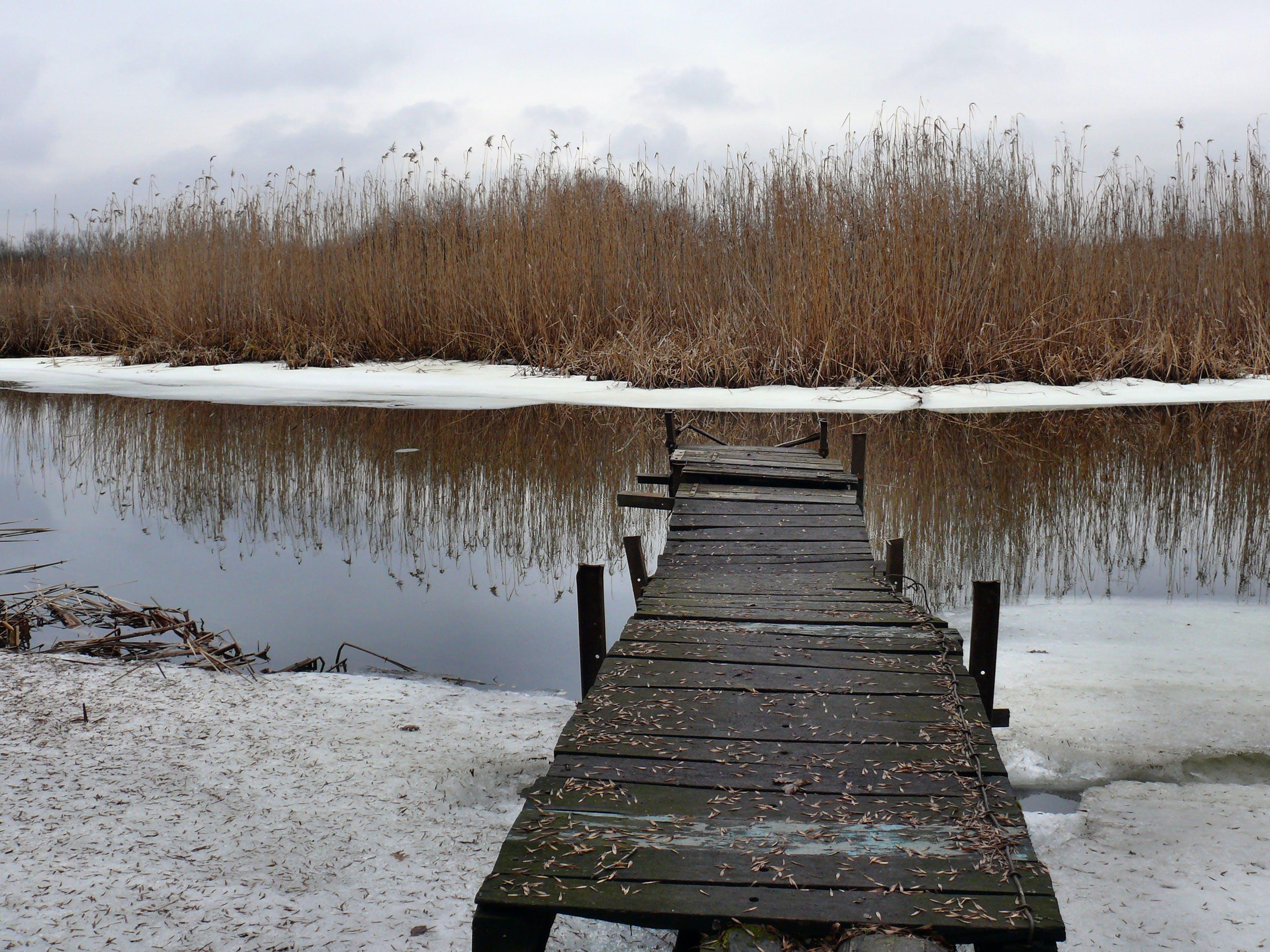 冬季, 冰, 冷, 反射 的 免费素材照片