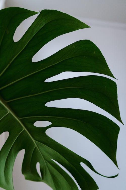 Foto stok gratis botani, dari dekat, daun