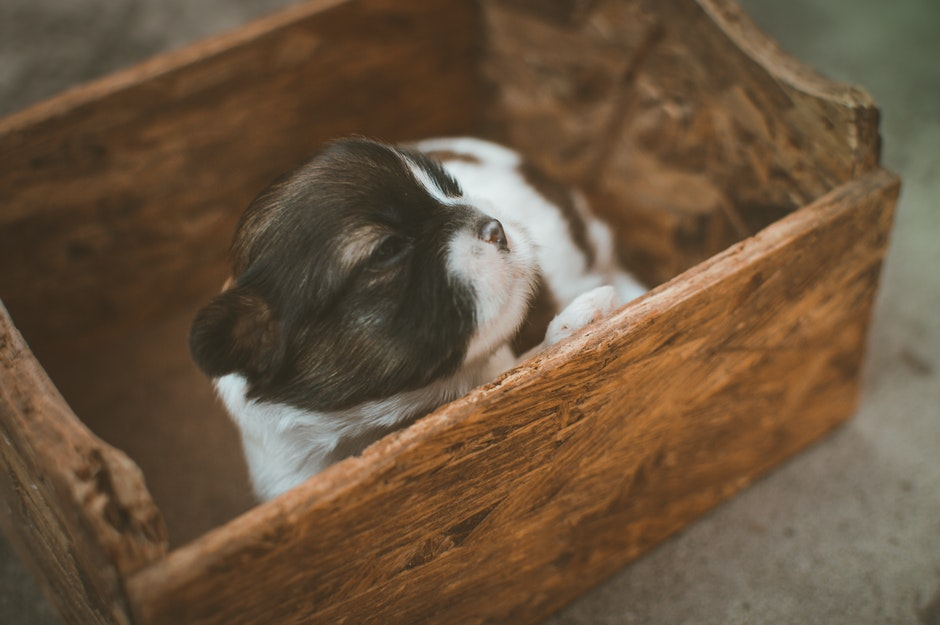 Black and White Puppy on Brown Wooden Box
