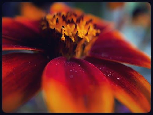 Free stock photo of beautiful flower, blooming flower, macro photo