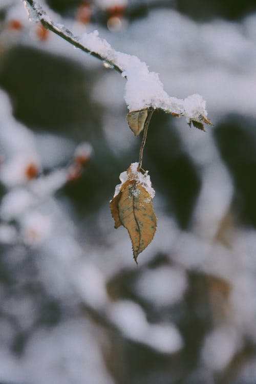 Free stock photo of background, cold, color