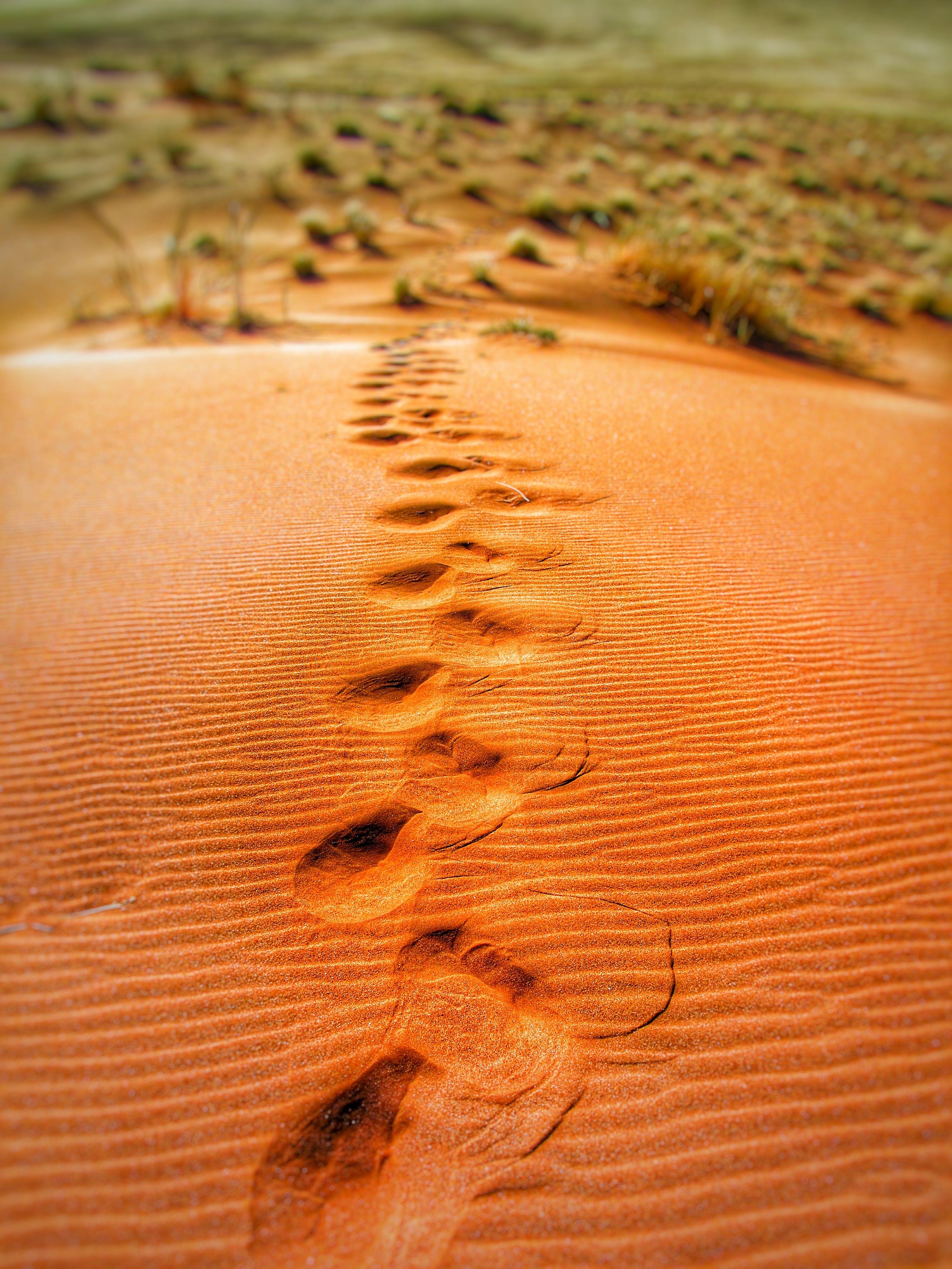 Základová fotografie zdarma na téma duna, duny, písečné duny, poušť