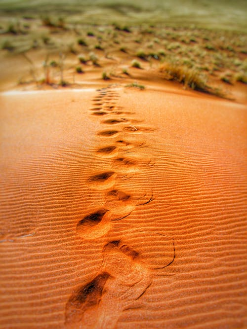 Foot Prints on Desert during Daytime