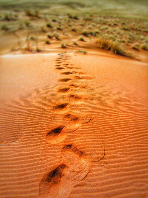 Ingyenes stockfotó dűne, dűnék, homokdűnék, lábnyomok témában