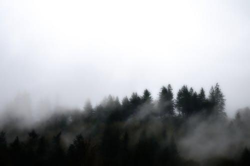 Fog over fir forest in misty morning