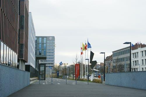 Free stock photo of belgium, city hall, leuven