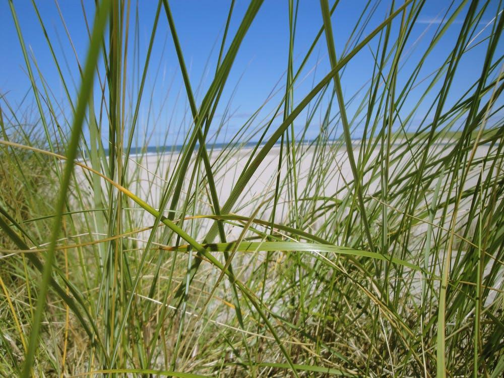Free stock photo of beach, dunes, texel