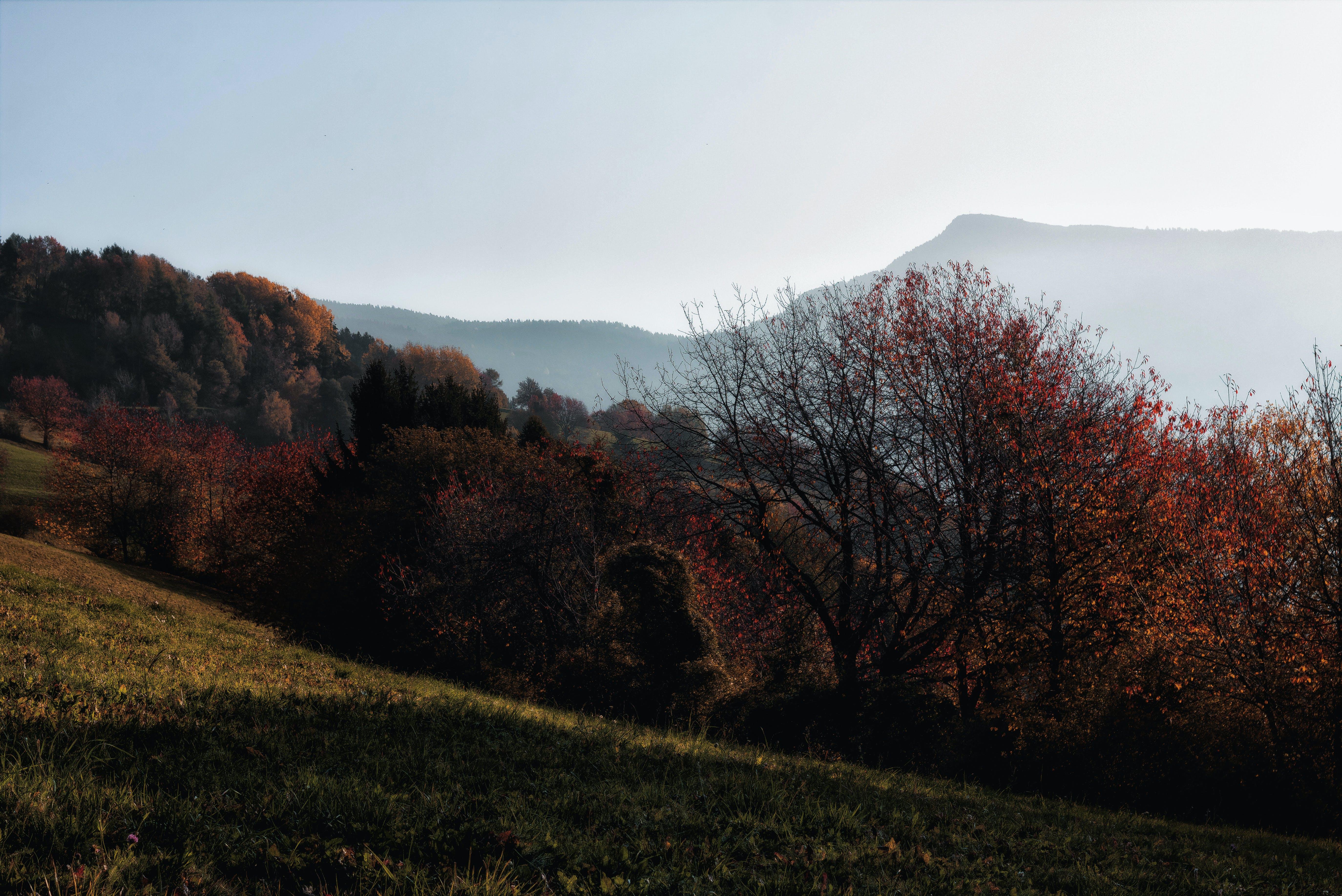 Gratis arkivbilde med daggry, dagslys, fjell, gress