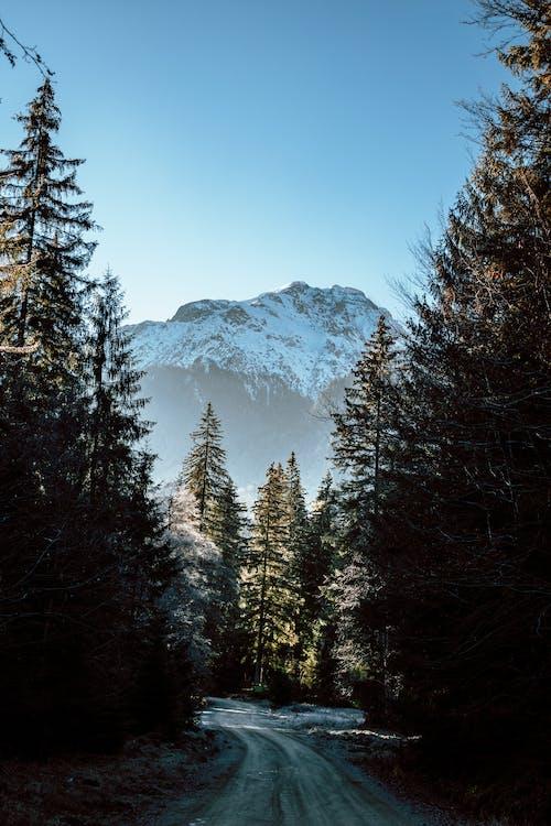Immagine gratuita di alba, alberi, albero