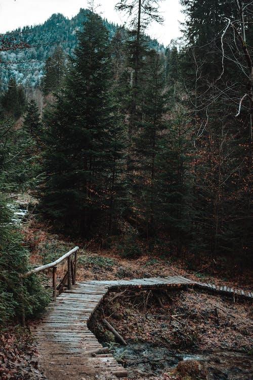 Immagine gratuita di acqua, alberi, albero
