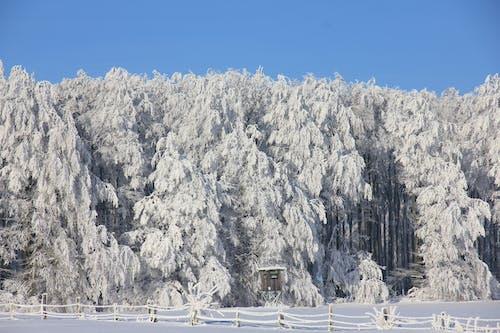Gratis arkivbilde med forkjølelse, hvit, skog, snø