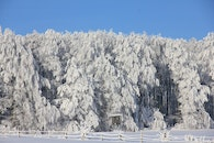cold, snow, forest